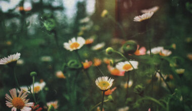 the-psychology-of-flowers_feat
